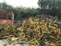 哪些生活垃圾可回收